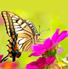 Diamond painting van een vlinder.