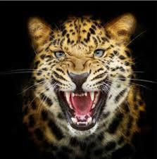 Diamond painting van een grommende tijger.